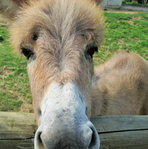 Don the Donkey. Source: Lynn Greyling.
