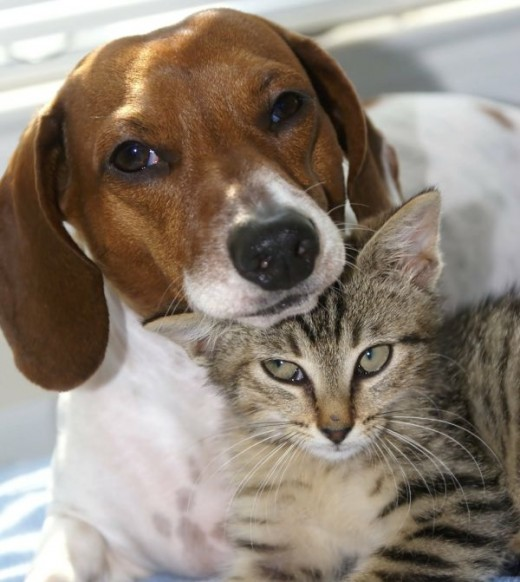 Cats and Dogs can be Friends
