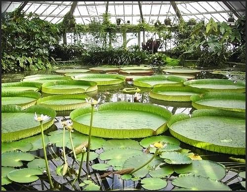 Belgium National Botanical Garden