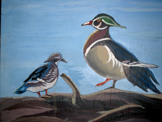 Wood Ducks...