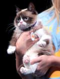 Grumpy Cat, Too Cute To Ignore