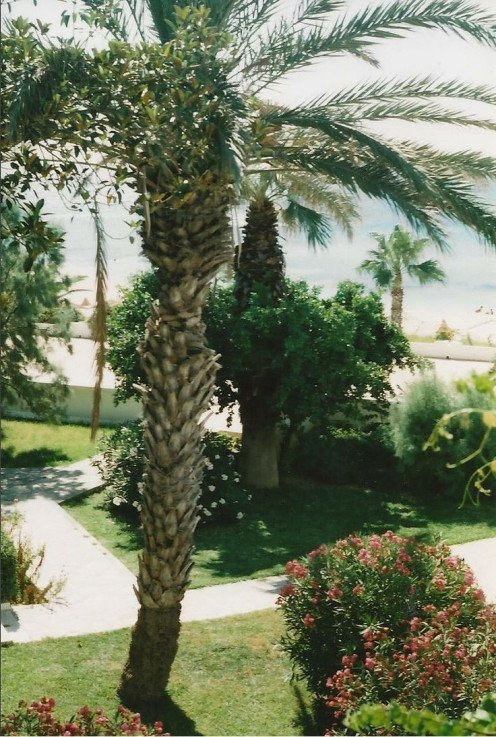 A View of the Hotel gardens and sea view at the Bel Azur hotel in Hammamet