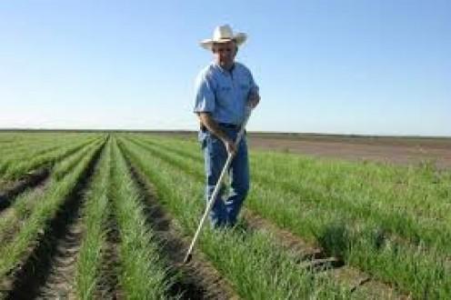 Ridding the crop of weeds