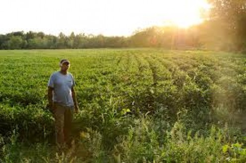 A man and his field