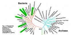 PHOTOSYNTHETIC BACTERIA: GREEN BACTERIA, PURPLE BACTERIA & CYANOBACTERIA