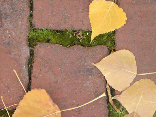 I just liked the composition of this red brick with moss and autumn leaves.