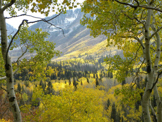 Big Cottonwood Canyon provides many areas of beauty in between the many ski slopes found there.