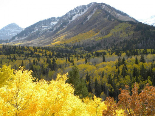 Big Cottonwood Canyon, UT. The Quaking Aspens set off the Evergreen trees and the red leaves of Oak trees in the area.