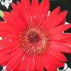 FlowerCS profile image