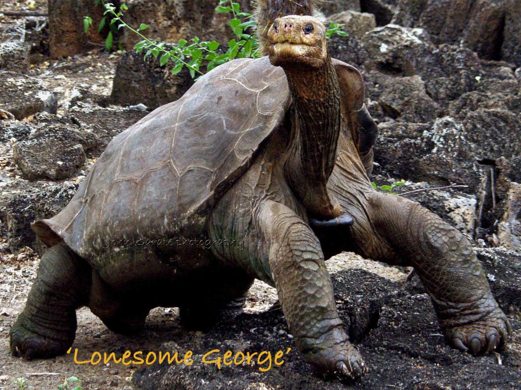 Most Endangered Animal | myideasbedroom.com - photo#1