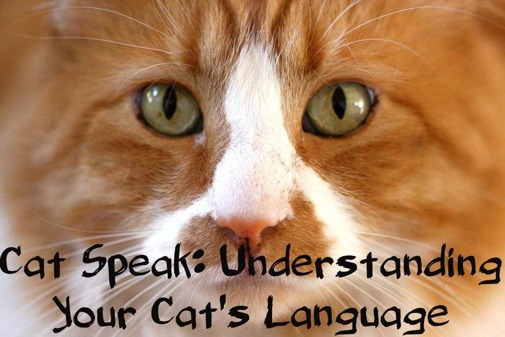 Cat SpeakUnderstanding The Language Of Cats PetHelpful - 18 hilarious sad cat problems that might explain why your cats so moody