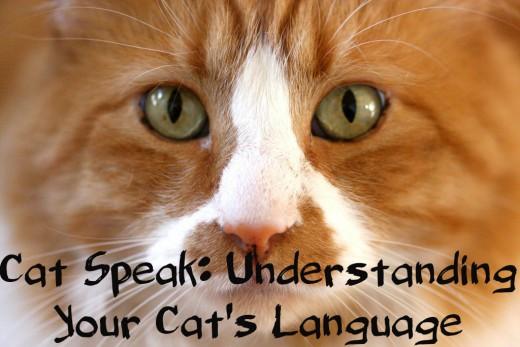 how to speak cat meows