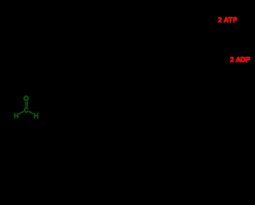 Ribulose Monophosphate Pathway