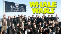 Whale Wars or Fanatical Idiots?