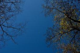 Twilight in Between the Trees