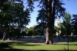Cesar Chavez Park In Sacramento