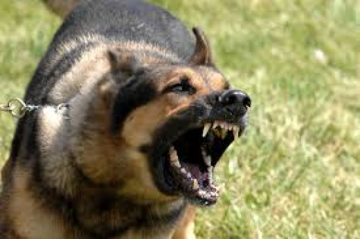 Military dog barking