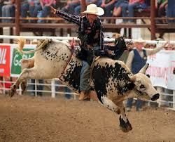 Rodeo Cowboy Riding a Bull