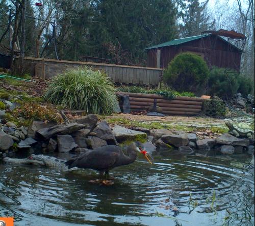 Pond Predators