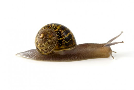 Photograph of Mollusk by Petr Kratochvil from PublicDomainPictures.net