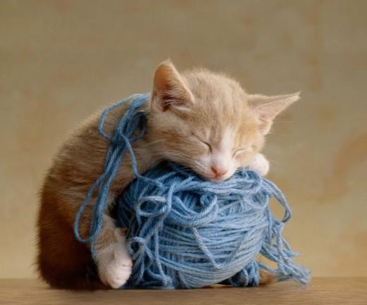 sleeping kitten on ball of yarn