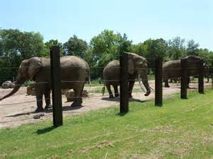 The elephants are always an awe-inspiring sight at any zoo