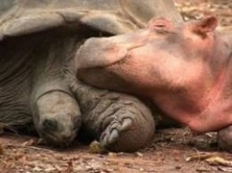 hippo and turtle friends