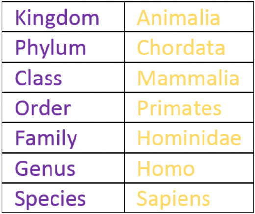 Classification of Humans.
