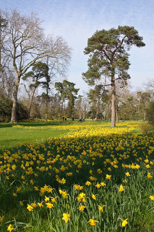 Beautiful daffodils cheer us up in the spring, but they do have powerful toxins.