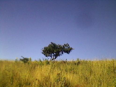 Piece of Land