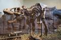 Top Four Fictional Depictions of Tyrannosaurus-Rex