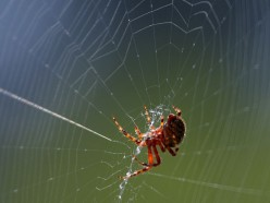 Spider Webs and Dwellings