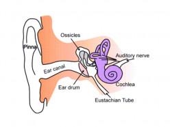 Ear Health: Ear Tubes