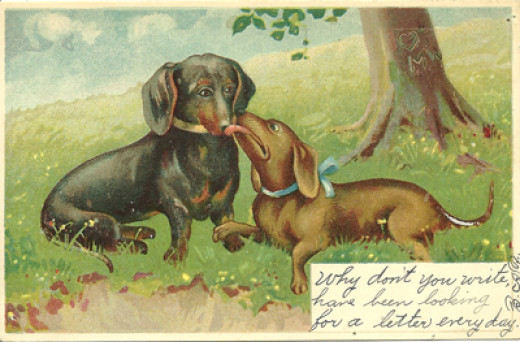 Old Vintage Dachshund Postcard From My Personal Collection