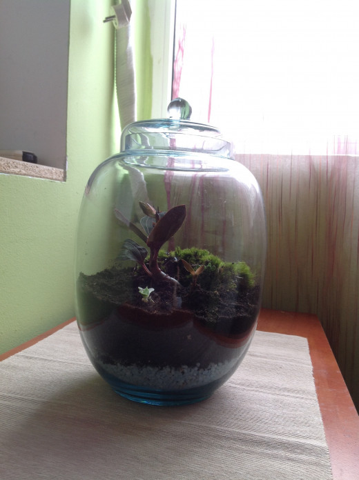 Now take a step back and relax. You are the proud owner of a terarium.
