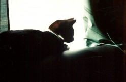 Homer's Odyssey: A Cat Story