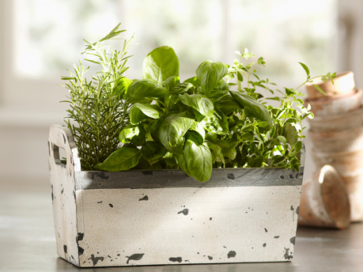 A wooden planter box like this one makes for a great gardening area for herbs or small vegetable plants. Make sure you line it with plastic so the water doesn't damage your counter or the wooden planter.