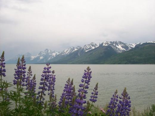 Jenny Lake, WY