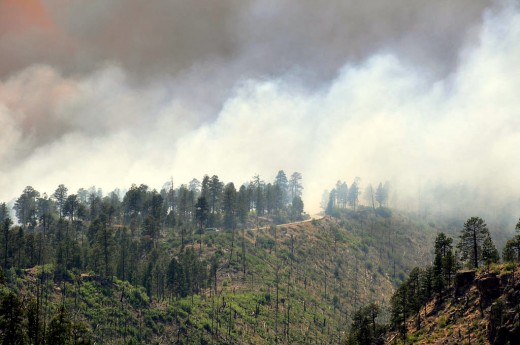 In 2011, The Las Conchas Fire started when a fallen tree came in contact with nearby power lines. The fire burned over 121,000 acres, including 63 residences near the Los Alamos National Laboratory.