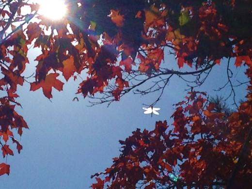 Dragon fly, Salt Lake City, UT