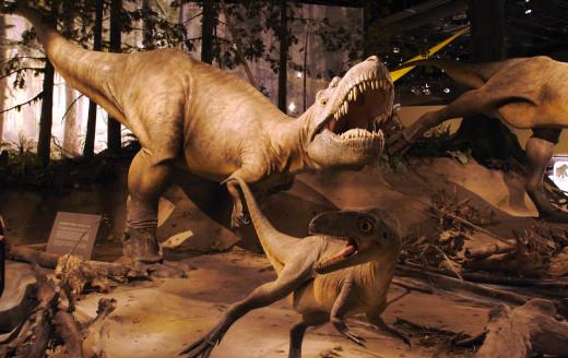 Albertosaurus (Royal Tyrell Museum).