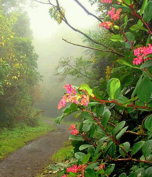Heavy rains produce Costa Rica's famous rainforests.