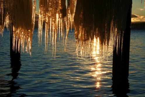 Afternoon sun through the icicle curtain