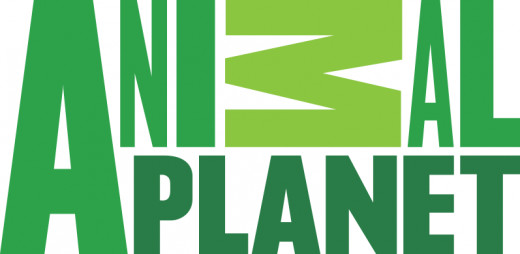 Animal Planet's current logo.