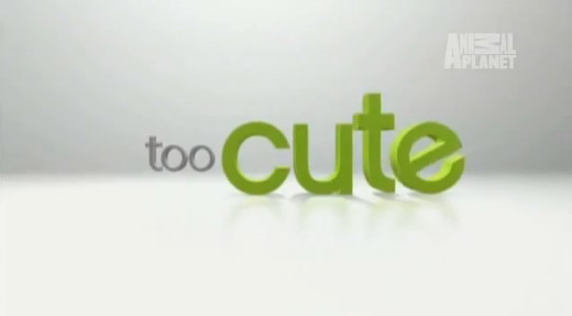 "Title Card for the ""Too Cute"" series."