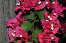 A basic wreath