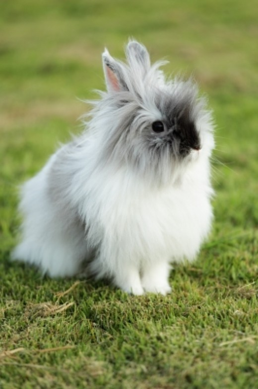 Bunny rabbits are one of the best pets to own.