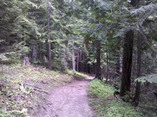 One of the multi-use trails in the park.
