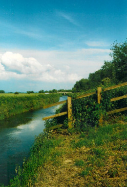 A Rhyne on the Somerset Levels