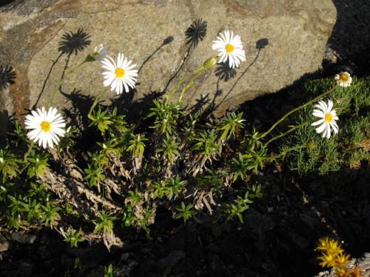 fleurs-des-montagnes.net